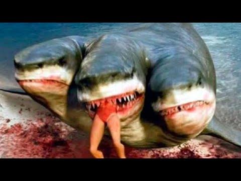 Resultado de imagen para imagenes el tiburon de dos cabezas