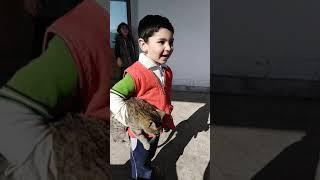Бесстрашный мальчик Эдуард Дикий спасает кошку от собак!