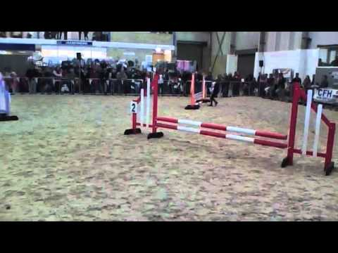 Dog Show Jumping