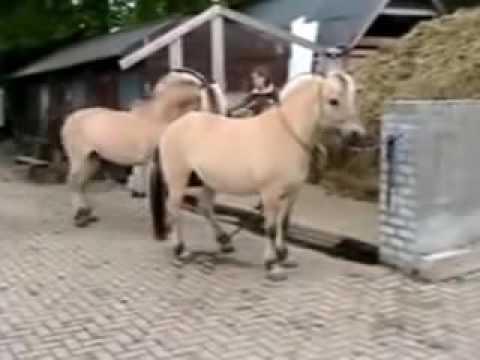 Animal Mating 2016 | Animal Mating Wild Horses Breeding
