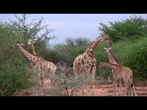 Waterberg Wilderness - Your world of experience at the Kalahari's table mountain