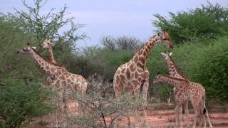 Waterberg Wilderness - Your world of experience at the Kalahari
