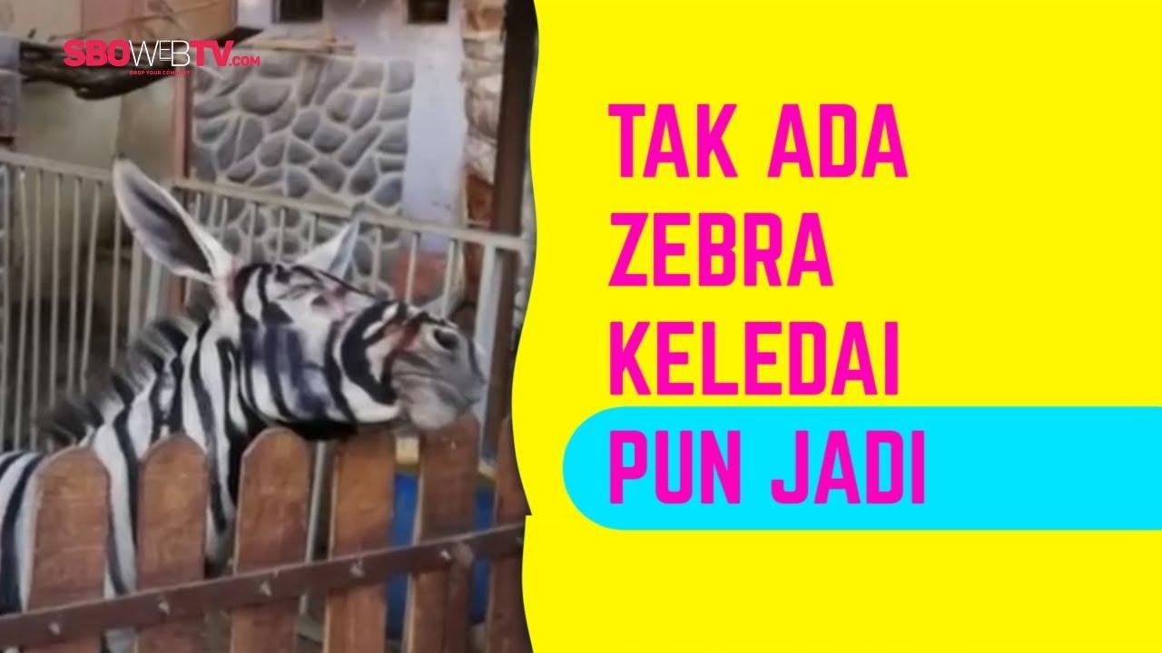 Beginilah Kalau Keledai Jadi Zebra