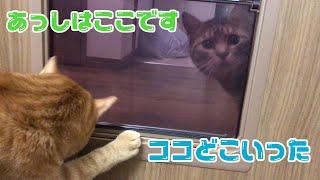 ペット用の扉を猫達に開放してみた反応は!? thumbnail