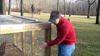 Using Basic Chicken Wire on a Backyard Coop