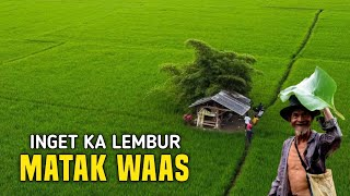 Download MATAK WAAS INGET KA LEMBUR | SUASANA YANG DI RINDUKAN ORANG KOTA