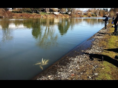 Alton Baker Canal Fishing - Eugene
