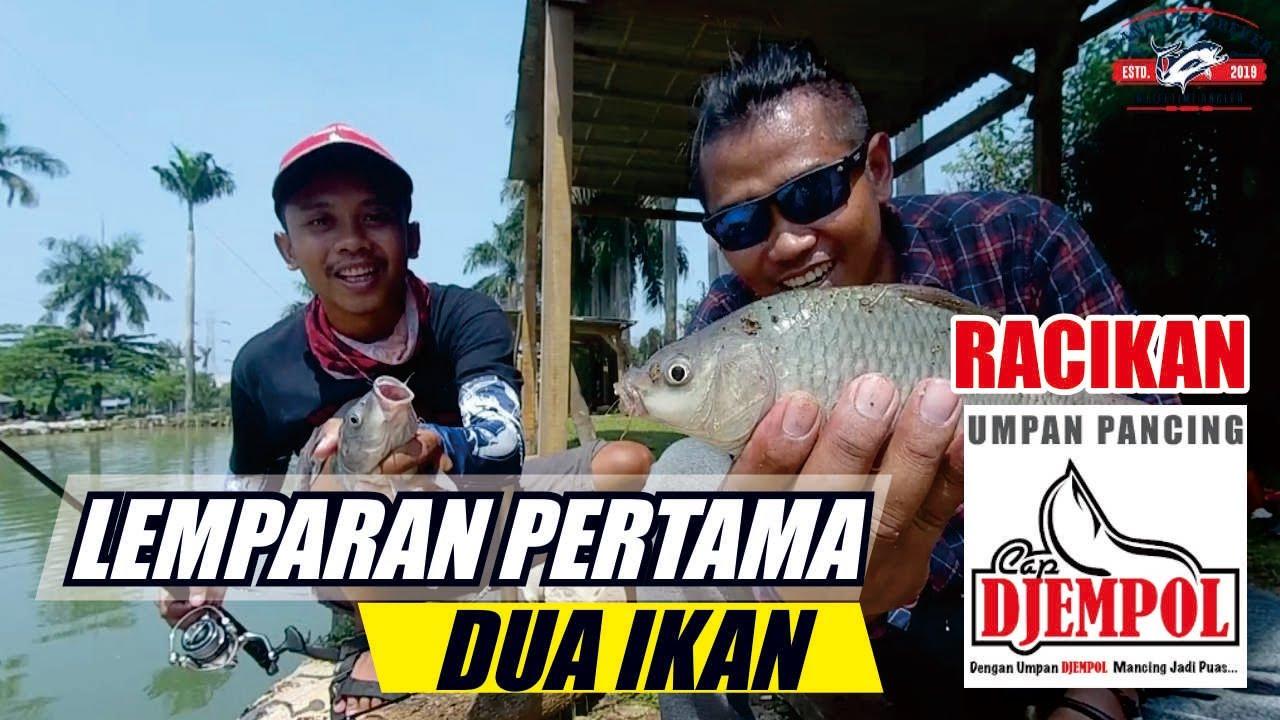 Umpan Ikan Mas Djempol Kroto Vs Tanpa Kroto With Agung Syakirul Youtube