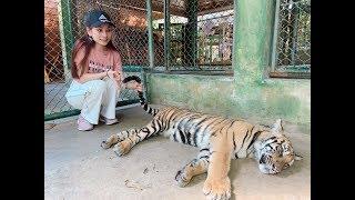 Sara Luu đi thăm Little Tiger tại Tiger Kingdom ở Phuket Thái Lan