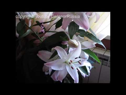Лилии. Как избавится от запаха цветов лилии? Очень просто!