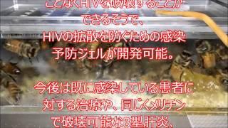 ヘルペス 脳炎 メリチンで治す 蜂針治療 新宿 早稲田駅近く