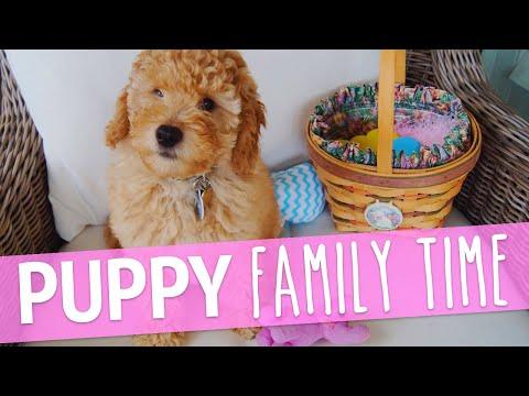 PUPPY'S FIRST BEACH TRIP | PUPDATE #4