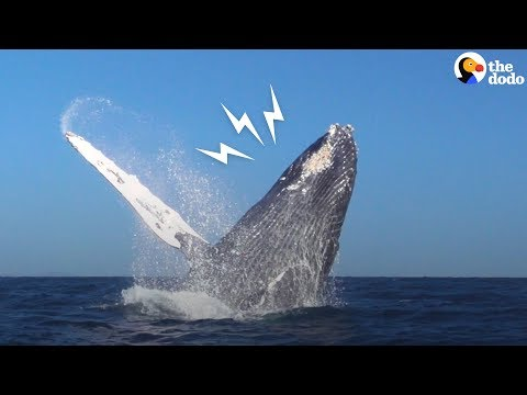 Whale Rescued From Fishing Net Thanks Rescuers In THE BEST Way | The Dodo