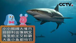 [智慧树]道哥和摩尔:鲨鱼|CCTV少儿