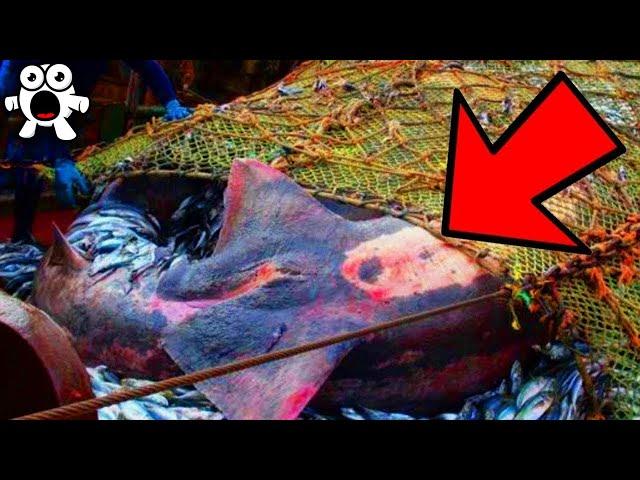 Cosas Locas Que Pescadores Han Sacado De Aguas Profundas