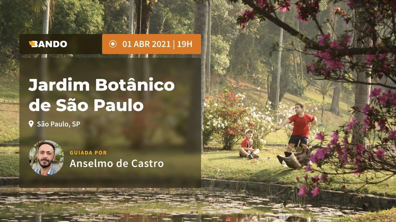 Jardim Botânico de São Paulo -  Experiência guiada online - Guia Anselmo de Castro