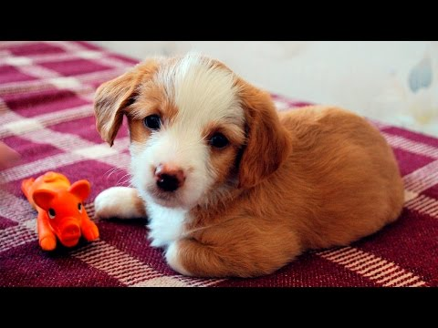 Funny Cute Puppies & Dogs #95