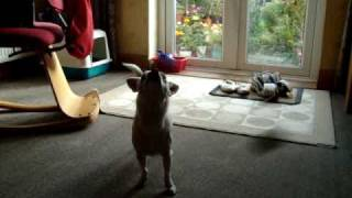 while sasha is playing with her toy, zoe always senses it and she c...