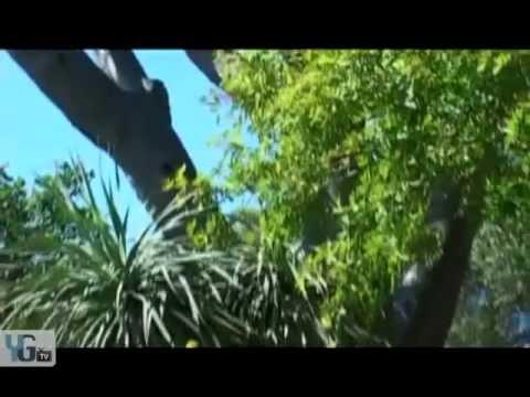 YGTV - Gibraltar Attractions - Alameda Gardens