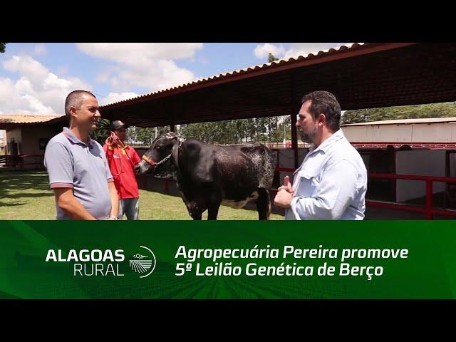Agropecuária Pereira promove 5º Leilão Genética de Berço