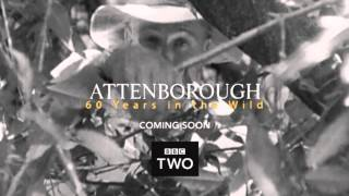 BBC Two - Attenborough 60 years in the Wild Teaser 2