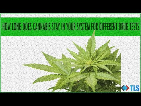How Long Does Cannabis Stay In Your System For Different Drug Tests