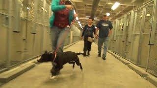 Невероятно трогательный момент, реакция собаки когда она поняла, что ее приютят