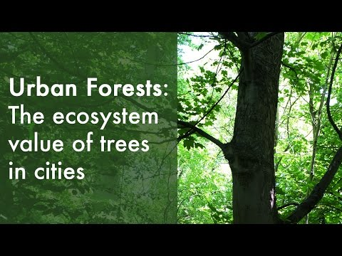 Urban forests: A European perspective | Dr Johan Östberg (2015)