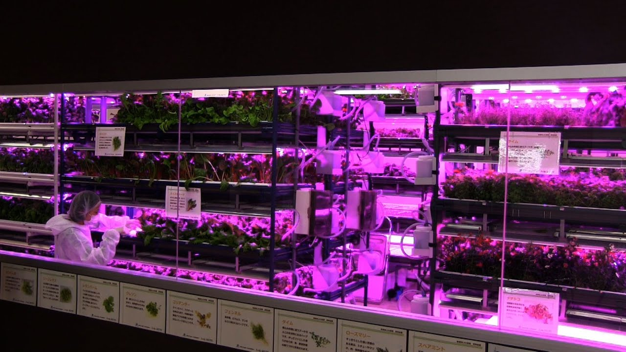 Led Kitchen Garden Urban Vegetable Garden System With Led Lighting Diginfo Youtube