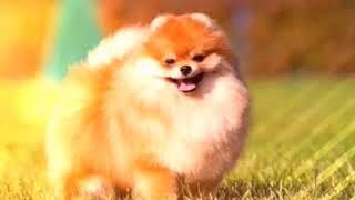 Клип 1| собачки милашки 🐩🐶🐾