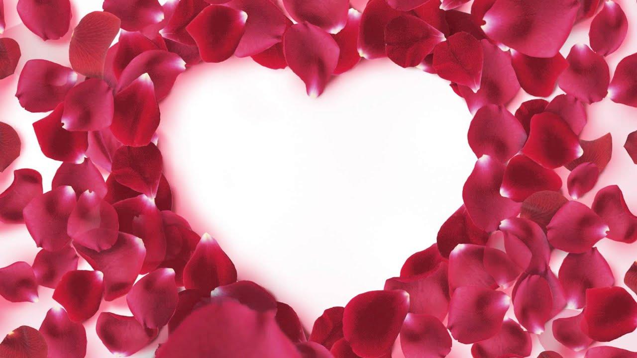 Footage Background Rose Petals Heart Frame Youtube