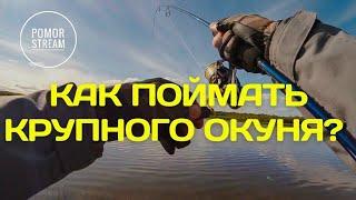 Крупные окуни гнут спиннинг Рыбалка в Архангельской области