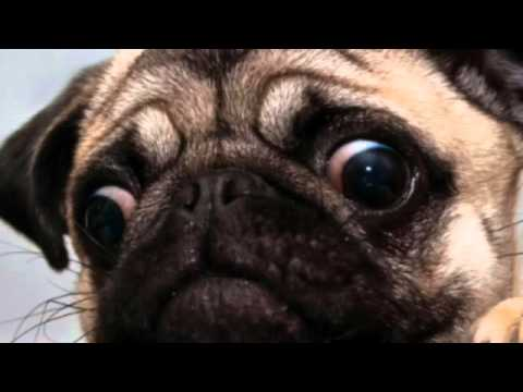 Funny Dog Pictures 💖