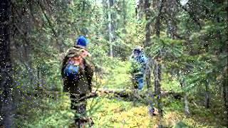 В лесу Старинный вальс