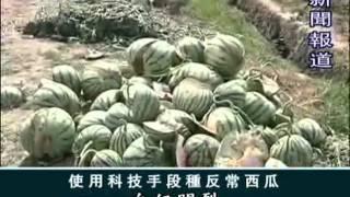 【聖賢教育 改變命運】第1張DVD-11化肥農藥和激素的世界