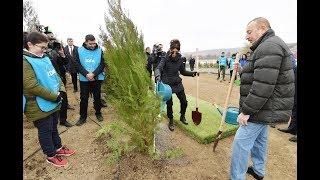 Президент Ильхам Алиев и первая леди Мехрибан Алиева приняли участие в акции по посадке деревьев