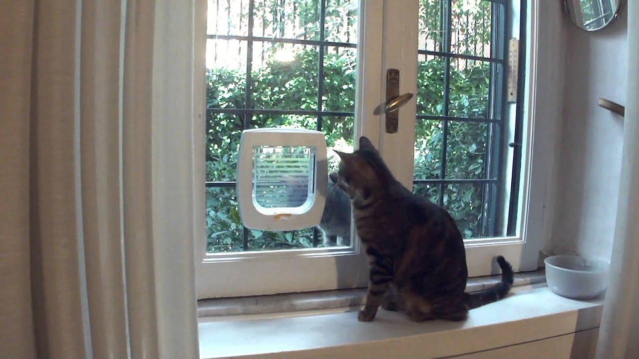 Nuova porticina solo per gatti youtube - Porta basculante per cani fai da te ...