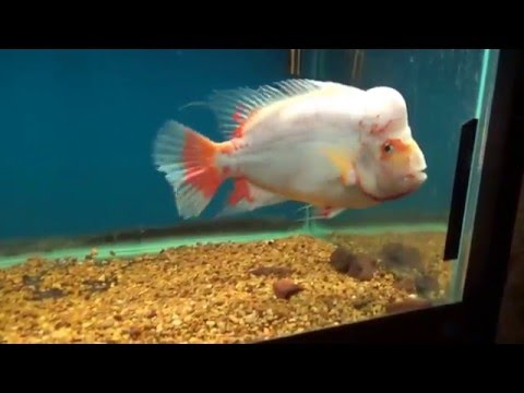 Skip Explains Why Overfeeding Is Bad For Your Fish