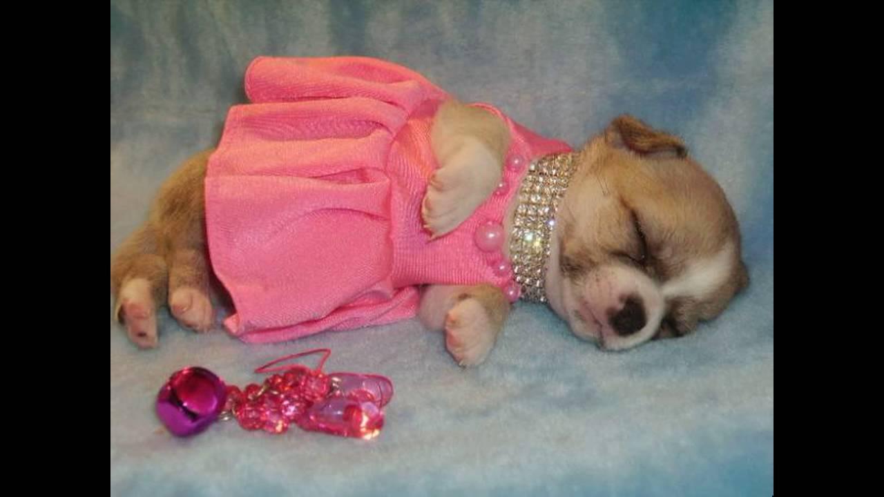 Смешные Фото Собак ( разных пород ) - YouTube