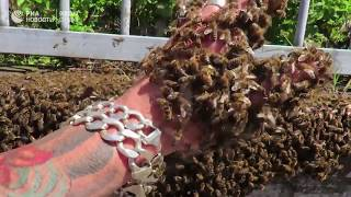 Человек пчела