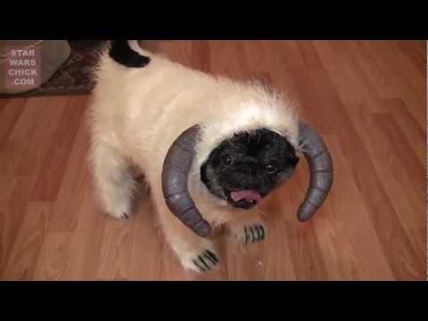 כלב בתחפושת האלווין