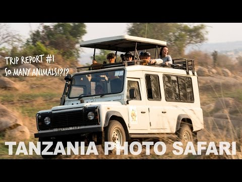 Tanzania Safari - So Many Animals, So Close