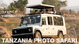 Tanzania Safari - So Many Animals, So Close