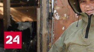 Смотреть видео Комариное нашествие в Воронежской области: откуда взялись полчища насекомых? - Россия 24 онлайн