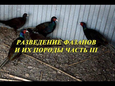 Вольер для фазанов своими руками видео