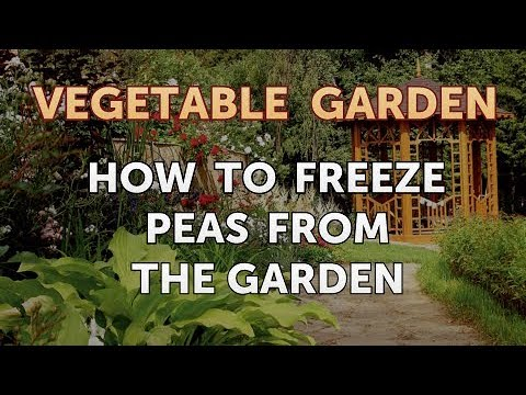 How to Freeze Peas From the Garden