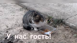 Упитанный Кот сосед