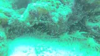 7/20/13 Prism 2 Rebreather Diving - Silent Diver
