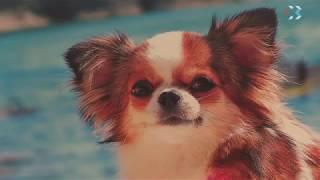 Севастопольская собака представила Крым на календаре 2018 года