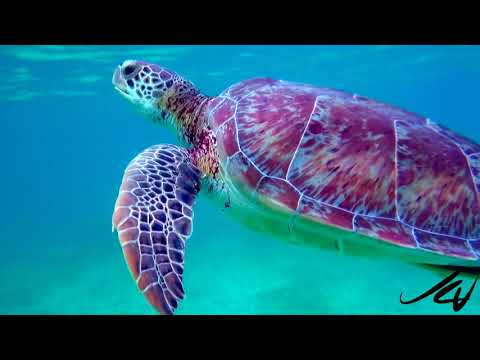 Riviera Maya Mexico, The Best Place to Be  - YouTube
